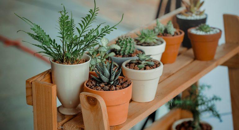 planten-verzorg-gids